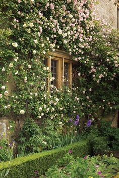 english roses | Tumblr