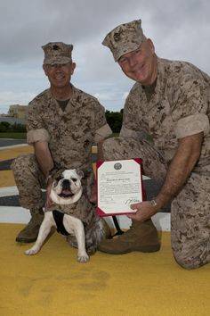 Brig. Gen. Niel E. Nelson, right, presents 10-month-old English bulldog Lance Cpl. Nellie B. Willful with her promotion warrant June 2 at Camp Kinser, as U.S. Navy Capt. Kevin J. Sweeney, left, holds her leash. Nellie was on her best behavior as her promotion warrant was read. Nellie is the mascot of 3rd MLG, III MEF. (U.S. Marine Corps photo by Cpl. Natalie M. Rostran/Released)