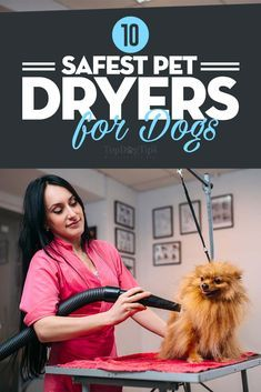 Top 10 Best Pet Dryers For Dogs In 2020 Portable Floor And Tabletop Top 10 Best Pet Dryers Dog Grooming Tools Dog Grooming Dryer Dog Grooming Tips