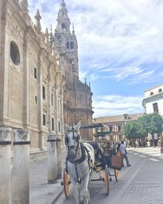 Seville has a special light!!!!  . . . . . . . #seville #cathedral #horse #carriage #babytiful #sevillecathedral #sevilleisdifferent
