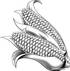 Hand drawn corn vector design 04 free vector download