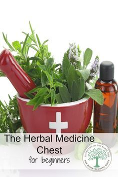 What to keep in your herbal medicine chest. These basics are great for anyone, especially those new to natural medicine. The Homesteading Hippy #homesteadhippy #herbs