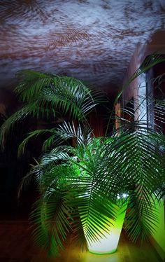 Le double éclairage pour sublimer vos plantes et votre intérieur