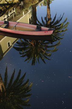 """Floating on Palms"" - Venice, Los Angeles, California"