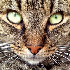Freddy £2.25 Pretty Cats, Pretty Little, Cute Cats, My Happy Place, Baby Love, Fur Babies, Freddy 2, Kittens, Cute Animals