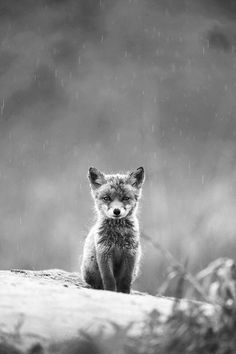 Fox Baby #black_&_white #fotoshooting #animals #fox #pub