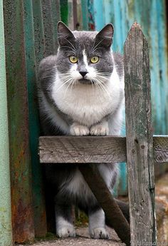 Just love funny cats . See more at, http://www.photographyinstyle.com