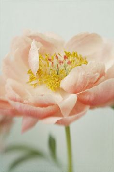 Coral Peony Photograph,  Flower Wall Decor, Shabby Chic Home. $17.00, via Etsy.