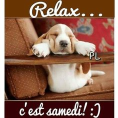 New Funny Dogs Quotes Sleeping Ideas Bon Weekend, Dog Quotes Funny, Funny Dogs, Animals And Pets, Cute Animals, Happy Week End, Amor Animal, Image Citation, Funny Animal Pictures