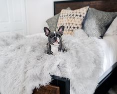 Keep your home clean with ultra soft covers, from the couch to your bed, with the grey PupProtector™ - A waterproof luxury pet throw made from high-quality, machine washable faux-fur. White Faux Fur Throw, Animal Print Bedding, Faux Fur Bedding, Orthopedic Dog Bed, Pet Beds, Doggie Beds, Your Pet, Couch, Sofa