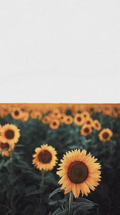 Mom Shares Photo of How the Keto Diet Transformed Her Body After Pregnancy Wallpapper Iphone, Wallpaper Backgrounds, Iphone Wallpaper, Sunflower Wallpaper, Nature, Photography, Sunflowers, Happiness, Mood