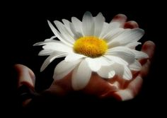 .daisies are forever..