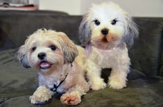 This Site Will Make a Stuffed Animal Clone of Your Dog