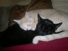 Thor und Mia Katze | Pawshake