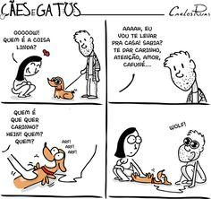 Cães e Gatos – Wolf! Quem não quer carinho ;-;