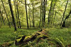El bosque de Munielllos, considerado reserva de la bioesfera, en Asturias
