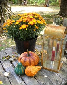 Autumn, mums & gourds