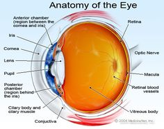 photos of the iris of the eye - Bing Images
