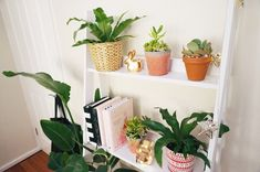My indoor house plants. Little urban jungle shelf. I love my succulents and ferns. They're so vibrant