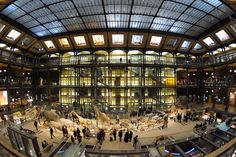 The Great Gallery of Evolution, National Museum of Natural History, Paris