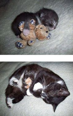 my bear  Now THIS is the sweetest thing EVER!