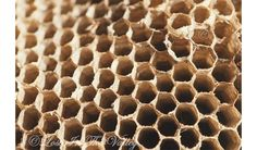 Geometric Photograph, Rustic Wall Art, Wasp Nest Photo, Beige, Black, Fine Art Photography, Bees Nest, Woodland, Rustic Decor, Macro Print on Etsy, #geometric #nature #woodland