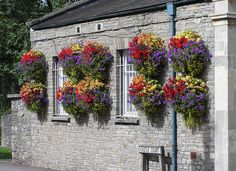 Hanging_baskets_in_thornbury_arp