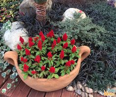 Vasos em cerâmica são perfeitos para dar mais destaque às plantas de flores coloridas.