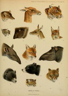 Resultado de imagem para zoological guide