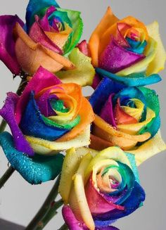 Rainbow Roses Next Day Delivery Kaleidoscope Tie Die Roses. We specialize in bringing happiness in large quantities. Next Day Delivery Rainbow Roses. We want you to have more Rainbow Roses so you can find more joy. Rainbow Flowers, Pretty Flowers, Rainbow Colors, Vivid Colors, Happy Flowers, Rainbow Bouquet, Rainbow Stuff, Neon Flowers, Rainbow Hair