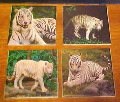 White Tiger image on Ceramic 4.25 x 4.25 tile by TwoPuppys on Etsy