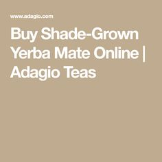 Buy Shade-Grown Yerba Mate Online | Adagio Teas