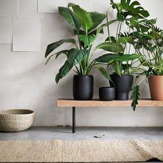 Sisustusvinkki, joka toimii varmasti: viherkasvit virkistävät kotia ja mieltä  - myös talvella  #ihanaaollakotona #SINNERLIG-sohvapöytä ja -ruukut