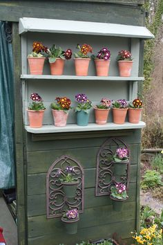 Primula Auricula Back Gardens, Outdoor Gardens, Allotment Ideas Inspiration, Plant Theatre, Garden Projects, Garden Tips, Garden Ideas, Primula Auricula, Growing Gardens