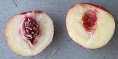 Dave Wilson's Top 21 Fruit Trees for the Southwest US
