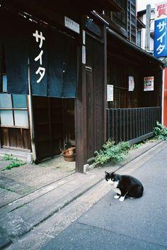 "pawnshop ""SAITA"" (by nekojimakeibu)"