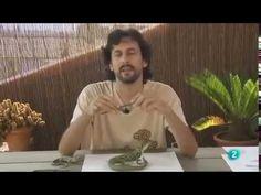 Cuaderno de Gaia 18º  Lagartos y lagartijas, principales especies ibéricas