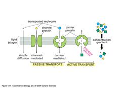 Comparison of passive and active transport