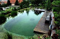 Awesome Natural Swimming pools by Whole Water Systems in Seattle, WA