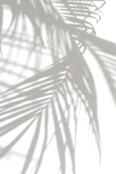 ideas plants wallpaper pattern palm trees for 2019 White Background Wallpaper, Palm Tree Background, Black And White Background, Black White, White Art, Tree Wallpaper Iphone, Plant Wallpaper, Wallpaper Art, Aesthetic Backgrounds