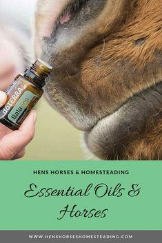 The use of essential oils with horses