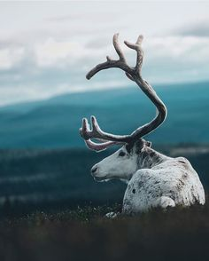 Details make design! Stay inspired from nature photography as our pieces are. Di… Details make design! Stay inspired from nature Nature Animals, Animals And Pets, Cute Animals, Wildlife Photography, Animal Photography, Travel Photography, Beautiful Creatures, Animals Beautiful, Animal Original