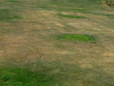 Anleitung zum schönen Rasen ohne Moos und Unkraut Bauanleitung zum selber bauen Selber machen
