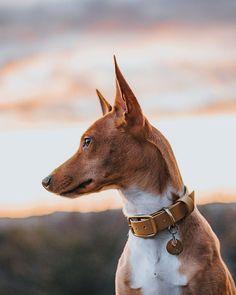 Unser Biothane Halsband in 3 Breiten besteht aus höchst reißfesten Polyestergewebe und ist mit Polyurethane ummantelt. Ein Halsband aus Biothane nimmt keine Feuchtigkeit, ist antibakteriell und verändert sein Gewicht auch nach einem Bad in Schlamm oder Wasser nicht. Die leuchtende Farbe bleibt immer gleich und verblasst nicht. | Halsband Hund | Hundehalsband Zubehör | Hundeleine Halsband | Pawsome Goats, Bad, Animals, Dog Accessories, Sled Dogs, Dog Leash, Linen Fabric, Interesting Facts, Animales