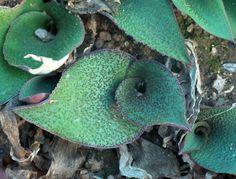 90 Spectacular Interior Design Trends Ideas On 2019 Bulbous Plants, Cacti And Succulents, Garden Plants, Perennials, Dinosaur Stuffed Animal, Bulbs, Planting, Gardening, Buzzfeed