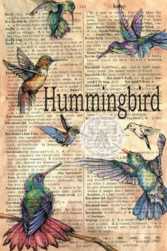 Hummingbird Mixed Media Drawing on Distressed, Antique, Parchment - flying shoes art studio