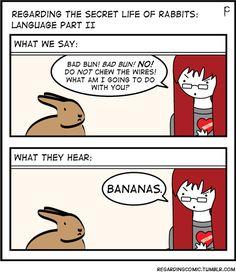 Sammy and his bananas…