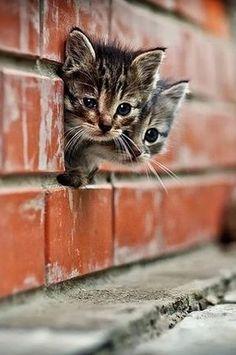 【はみねこ48】隠れようとしてるの?いろいろはみ出ちゃってる猫たち   CuRAZY