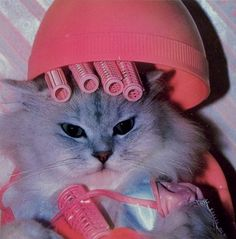 Cat in pink rollers! ♡