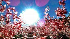 """Olhares do avesso: verso amigo olharesdoavesso.blogspot.com.br/2014/07/verso-amigo.html   Thursday poetry (poesia de quinta) """"sinal da interpretação original apropriada pelas amizades rebuscadas"""" """"Sign of proper original interpretation by lavish friendships""""  #verso #amigo #poesia #imagem #blog #verse #friend #poetry #image #Shījù #péngyǒu #shīgē #túxiàng #bókè #Kavitā #dōsta #kavitā #chavi #blŏga"""